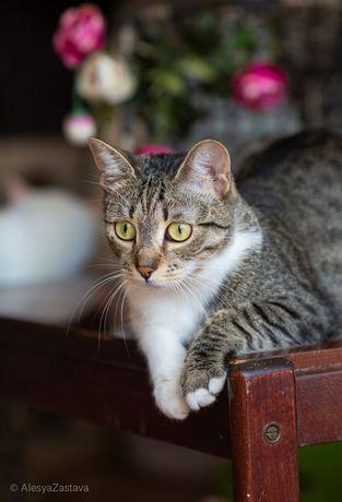 Милаша, 1 годик, кошка, кошечка, котенок