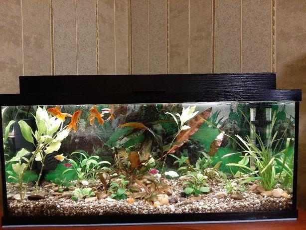 Продам діючий акваріум