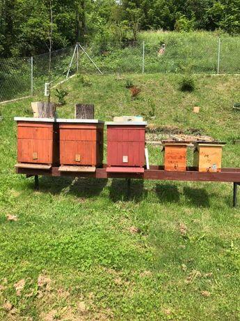 Dzierżawa pasieki pszczelej