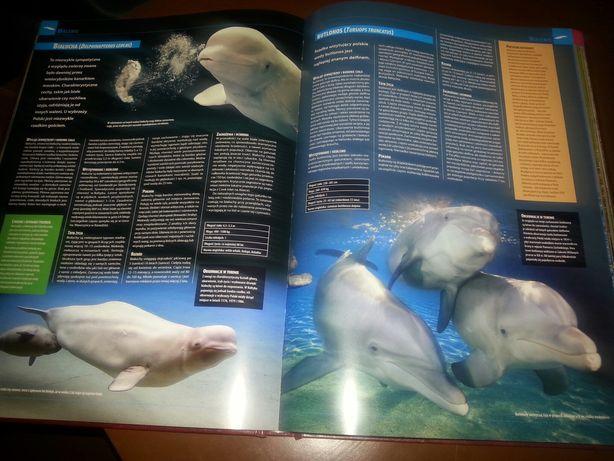 Ilustrowana encyklopedia ssaków Polski wydanie pierwsze