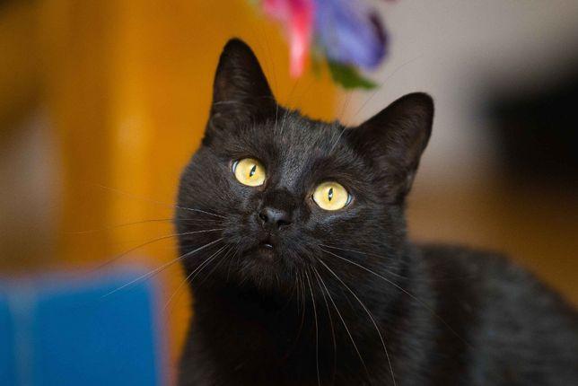 Отдам в хорошие руки красивейшего молодого кота Ершика .