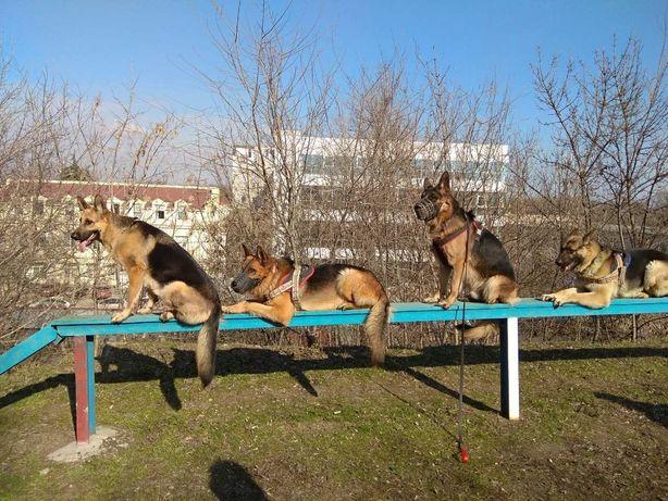 Дрессировка универсальных собак одесса