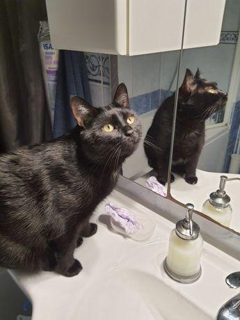 Zaginęła czarna duża kotka