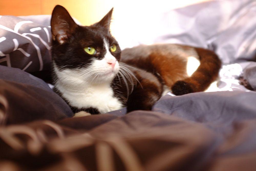 Молодая черная кошка с белой грудкой ищет дом Киев - изображение 1