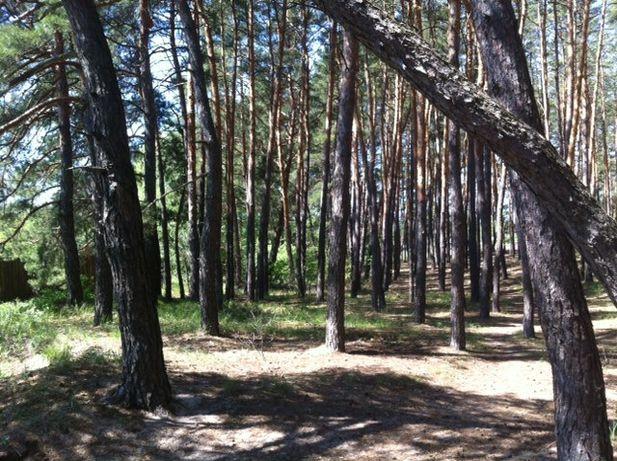 Элитные участки в лесу (последние 40 соток).Цена снижена!