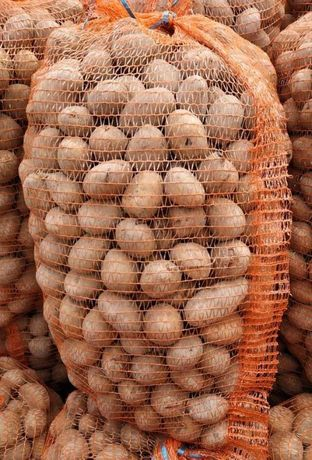 Ziemniaki Laskara 2 rok po centrali