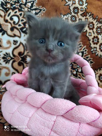 Котята,  кошенята в добрі руки