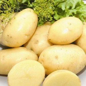 Продам посадочную картошку / насіннєва картопля