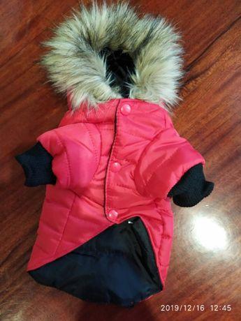 Одежда для мелких собак