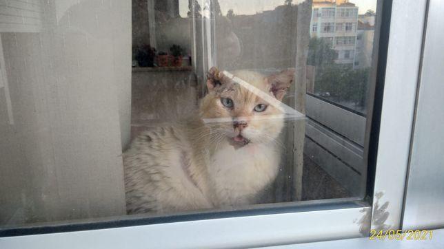 Adoção gatinho meigo