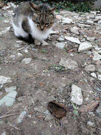 Дарую мишки ловить
