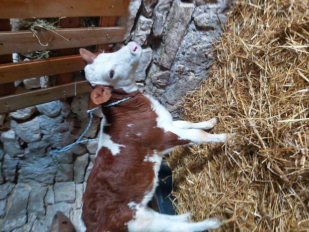 Opasy mięsne byczki i jałóweczki