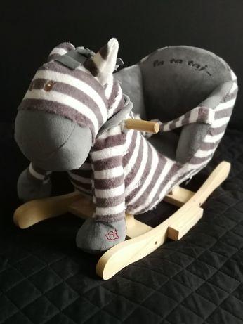 Zebra (konik) na biegunach - bujak / Nefere