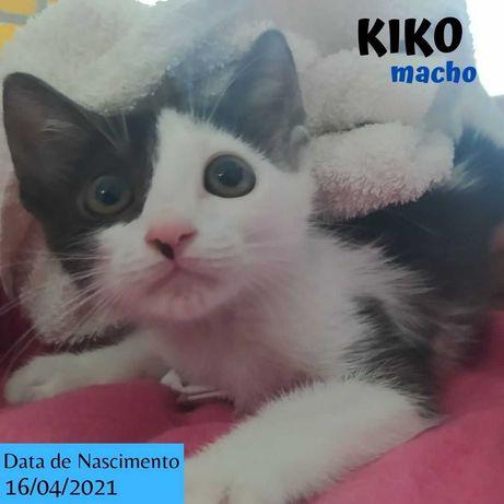 Gatinho 3 meses para adoção (Kiko)