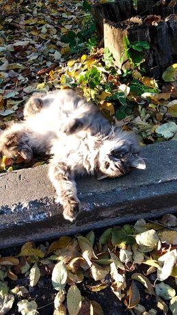 Кошечка-подросток ищет дом
