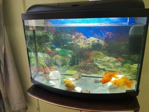 Продам акваріум на 60 літрів.