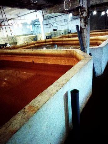 продам бизнес по выращиванию рыбы