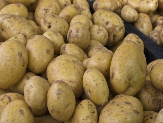 Картошка насіньова і велика