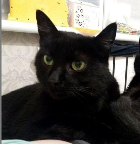 Стерилизованная черная кошечка ищет дом