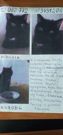 PILNE! Zaginęła czarna kotka Kielce!