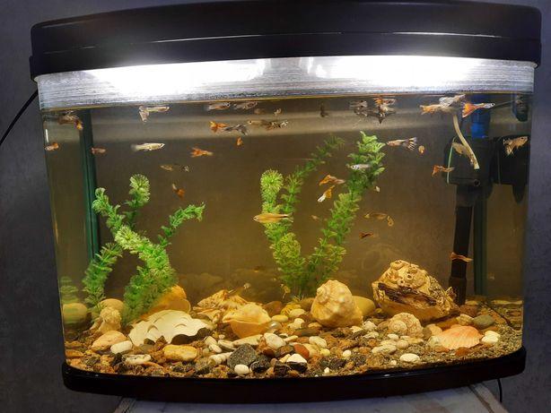 Аквариум для рыб на 60л