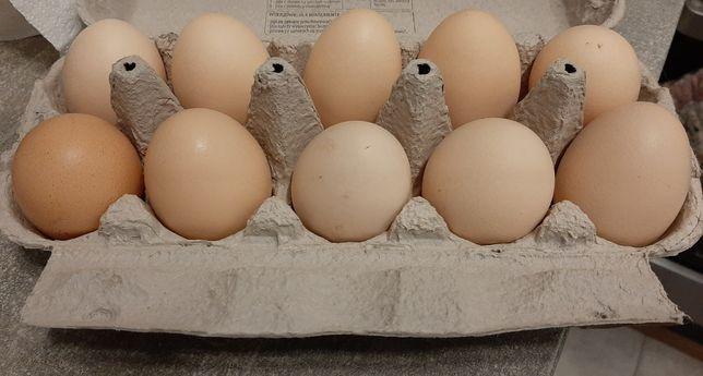 Jajka Wiejska od kur z wolnego wybiegu