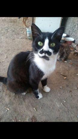 Хлопчик котик з цікавим окрасом