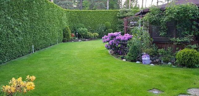 Usługi ogrodnicze. Pielęgnacja terenu zielonego