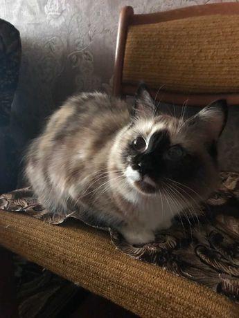 Необычная и очень ласковая кошечка Ася ищет новый дом!