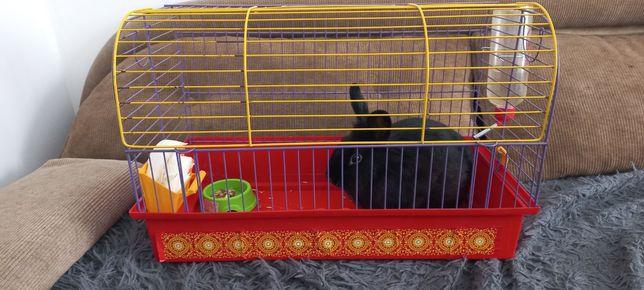 Декоративный Кролик БоБо