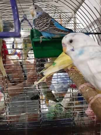 Попугаи и все для них