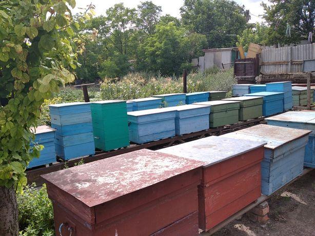 Пасека, пчелы, ящики, семья пчел