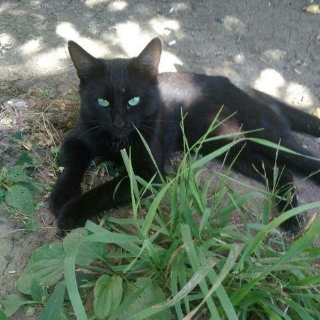 Отдам черного кота,9 месяцев