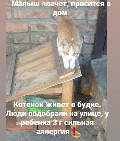 Котенок живёт в будке .