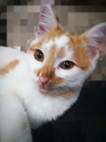 Кошка с карими глазками
