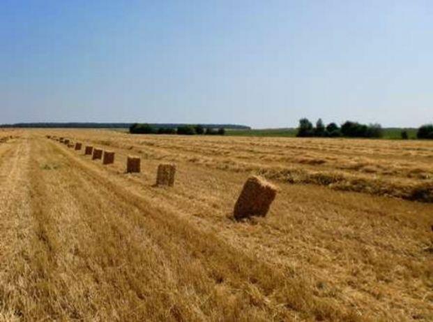 Солома ячна, пшеничная.