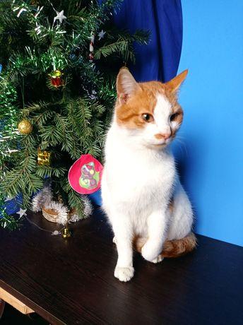 Яркий молодой кот