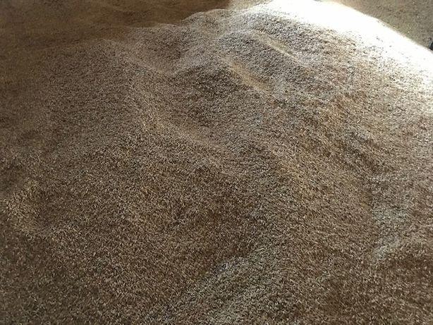 Mieszanka owies, pszenica, jęczmień 25 ton