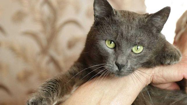 Кот, котик, котята, котёнок, котики бесплатно в добрые руки киев