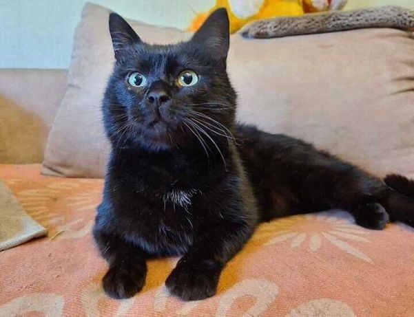 Красавчик-котик Марик в добрые руки