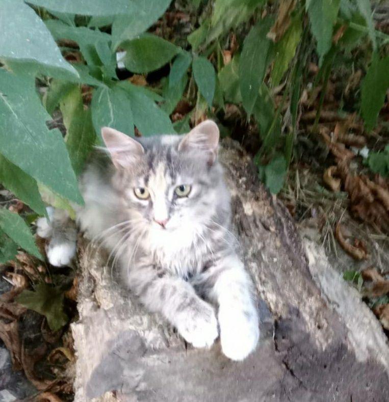 Отдам даром в добрые руки котенка