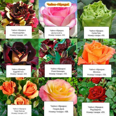 Рози Розніца