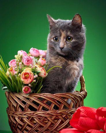 Кошечка Ириска ищет дом!