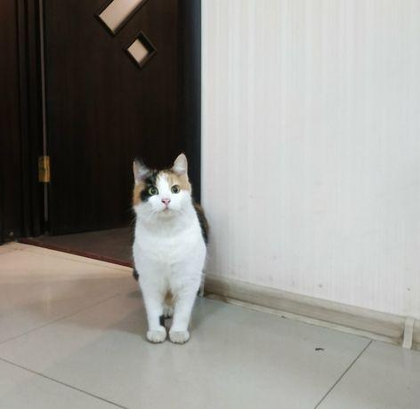 Кому чудо-кошечку трех-цветную с белым на счастье срочно!