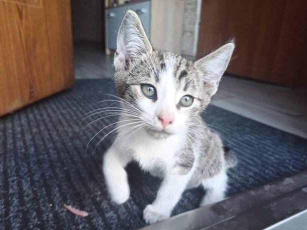 Oddam młode kotki