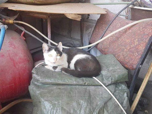 Pilnie poszukujemy domów tymczasowych dla kociąt