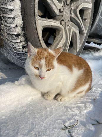 Очень добрая девочка замерзает на улице