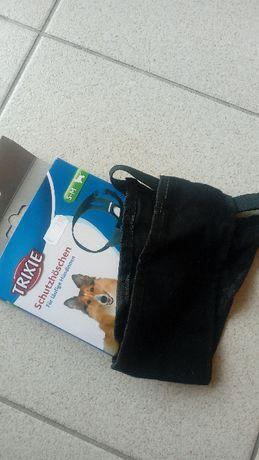 Cueca protetora para cadela em cio