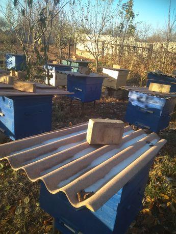 Пчелосемьи,пчелопакеты, отводки,сущ,улья.