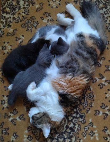 Котята, ищут добрую семью.